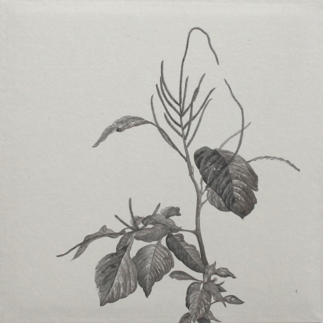 閑原 小草圖冊2- (8) 2012-2013紙本水墨畫 32x32cm